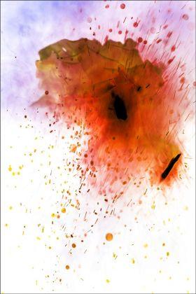 Bill Beckley, War of the Roses 16, 2017
