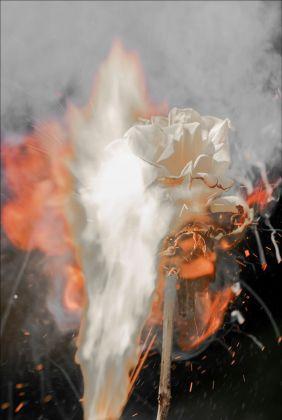 Bill Beckley, War of the Roses 54, 2017