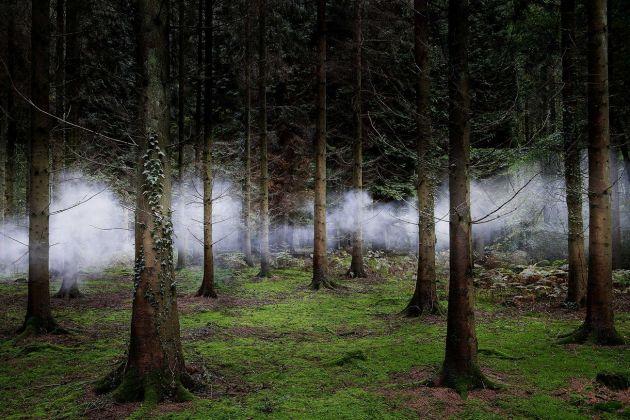 Ellie Davies, Between the Trees 1, 2014