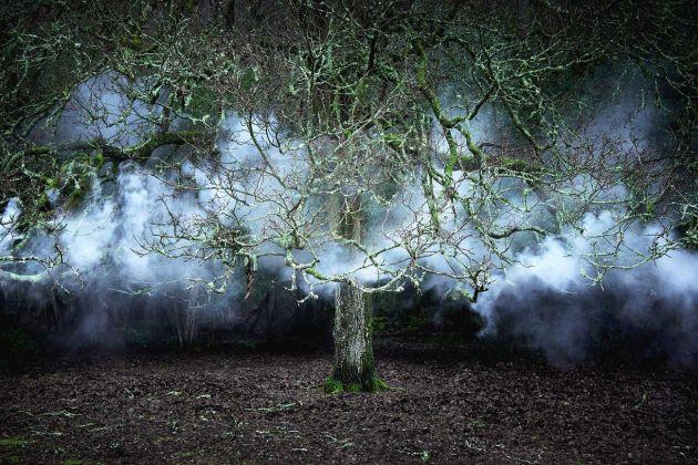 Ellie Davies, Between the Trees 11, 2014