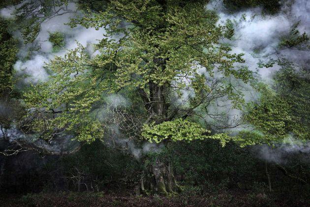 Ellie Davies, Between the Trees 14, 2014
