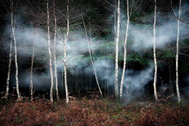 Ellie Davies, Between the Trees 2, 2014