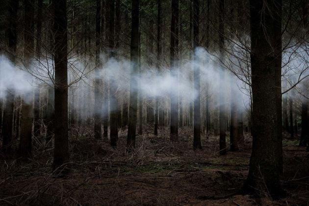 Ellie Davies, Between the Trees 6, 2014