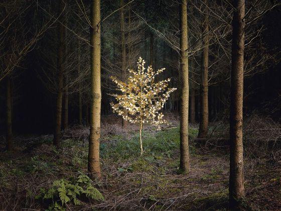 Ellie Davies, Smoke and Mirrors 5, 2010