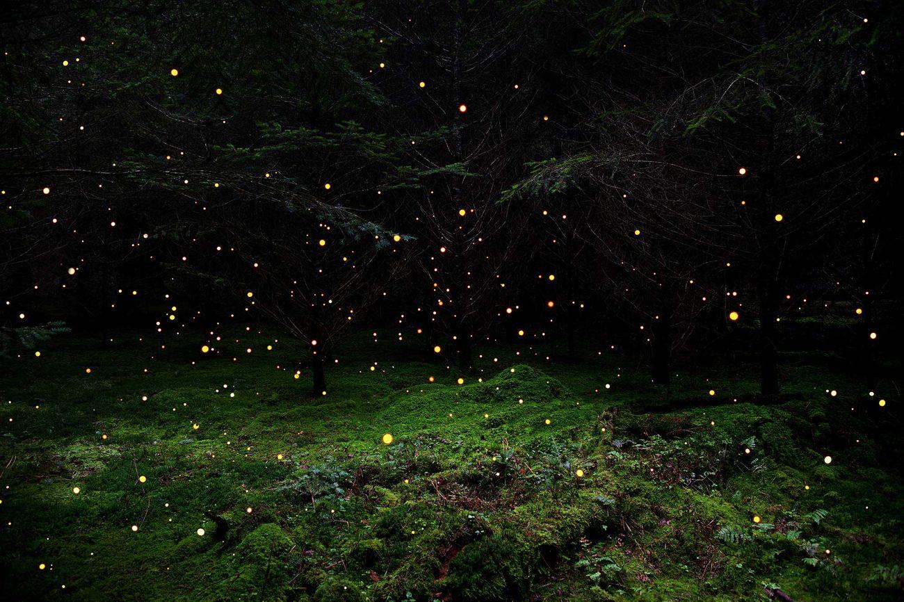Ellie Davies, Stars 5, 2014