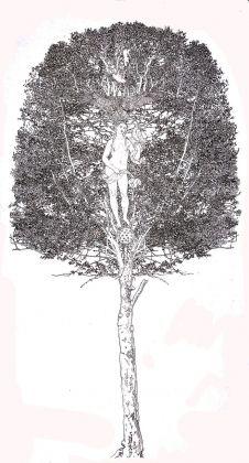Fernando De Filippi, Arbor Solis 3