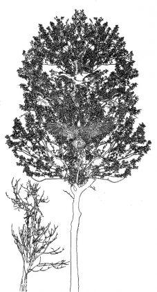 Fernando De Filippi, Arbor Solis 4