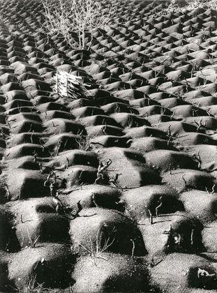Fulvio Roiter, Coltivazione vite, Etna, 1953 © Archivio Storico Circolo Fotografico La Gondola Venezia