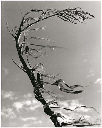 Fulvio Roiter, Meolo (VE), Sibilo, 1949 © Fondazione Fulvio Roiter