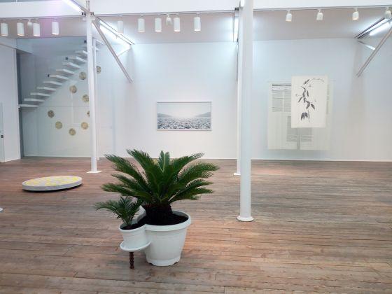 Processo alla Natura, 2018, veduta della mostra Courtesy Galleria Umberto Di Marino, Napoli