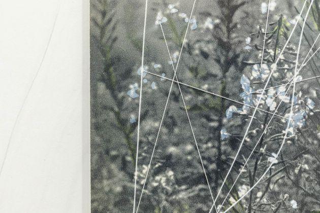 Claudia Losi, Windy Grass, 2017