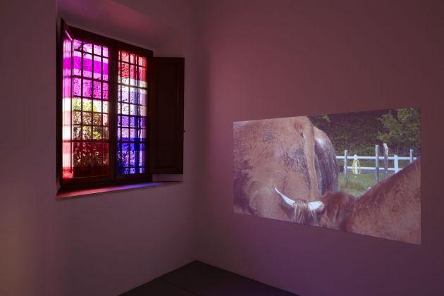 Dora Budor, Margaret Honda, Matthew Lutz Kinoy, Laure Prouvost, Reza Shafahi, Waiting for the sun, 2017, exhibition view, project space, SpazioA, Pistoia