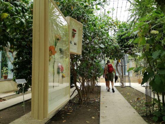 Manifesta 12, Alberto Baraya, New Herbs from Palermo and Surrounding. A Sicilian Expedition, Orto Botanico. Ph. Desirée Maida