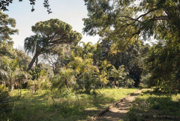Orto Botanico, Palermo. Photo Delfino Sisto Legnani, 2017. Courtesy OMA