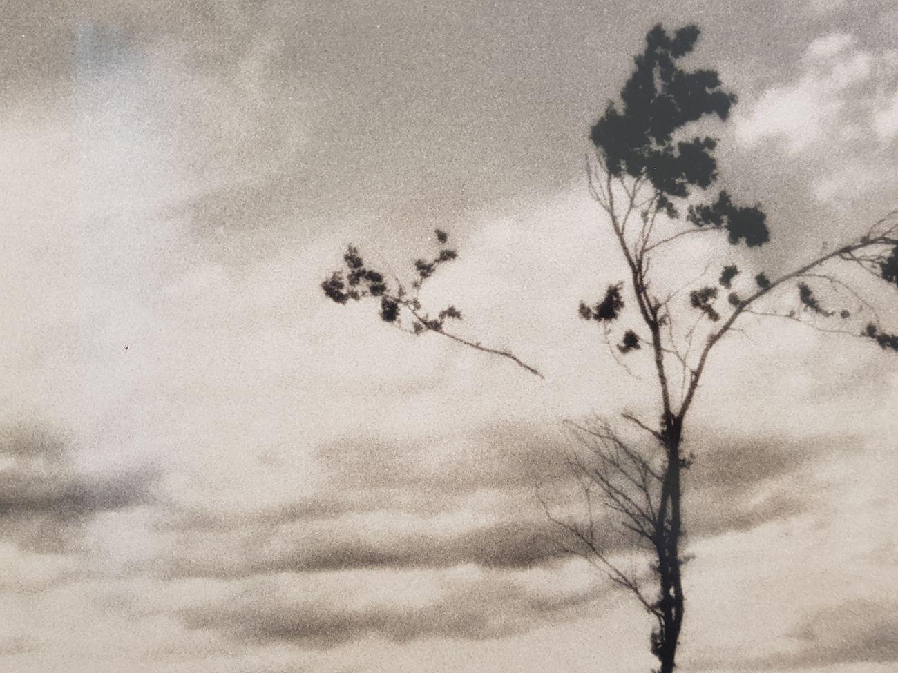 Rä di Martino, Open tree #7 © Galleria Valentina Bonomo