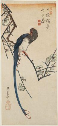 Utagawa Hiroshige Uccello del paradiso e susino in fiore 1830-35 circa 383 x 172 mm silografia policroma Museum of Fine Arts, Boston - William Sturgis Bigelow Collection