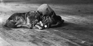 Un'immagine della performance di Joseph Beuys, I like America and America likes me (1974)