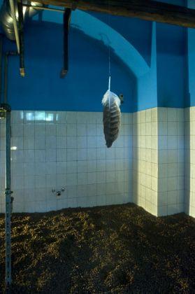 Alessandro Giampaoli. Symbolum. Installation view at Palazzo Fiumi Sermattei e Museo Speleopalenotologico e Archeologico, Genga 2018