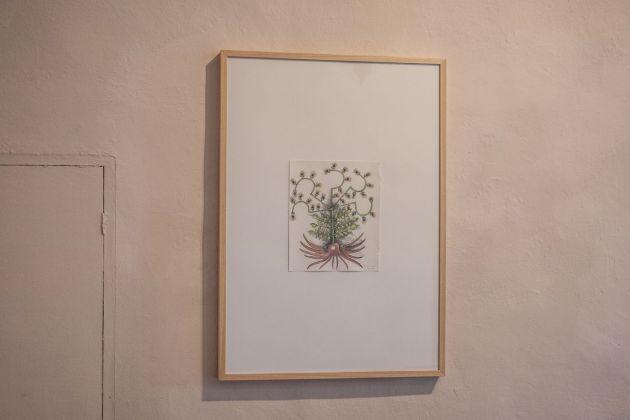 Laura Cionci. Il Giardino segreto. Palazzo dei Priori, Volterra 2018. Inchiostro e acquerello su carta