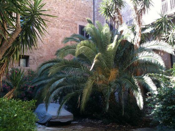 Palermo botanica. Giardino Palazzo Ajutamicristo. Photo Claudia Zanfi