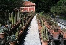 Palermo botanica. Orto Botanico. Photo Claudia Zanfi