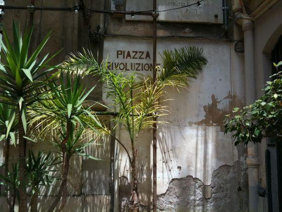 Palermo botanica. Palme in Piazza Rivoluzione. Photo Claudia Zanfi