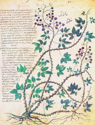 dal Codice farmacologico di Dioscoride di Vienna, 512 ca.