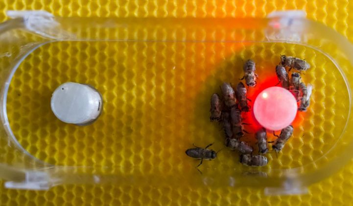 Artificial Life Lab, Symbiotic computation of bio hybrid systems © Artificial Life Lab Graz, courtesy AE_2018