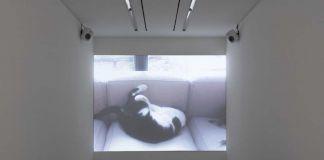 """Sophie Calle, View of the exhibition """"Souris Calle"""" at Perrotin Paris 13 octobre – 22 décembre 2018"""