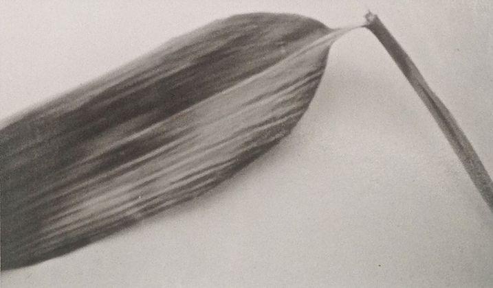 Mariateresa Sartori, Bamboo dalla serie Foglie, 2018. Digne les Bains. Photo Anne Perier