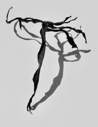 Adam Waymouth, Musa Acuminata Ballerina, Smoke and Ashes Series, 2017, Gelatine silver bromide print © Adam Waymouth