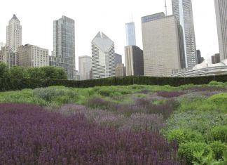 Piet Oudolf Gardens, Millenium Park, Chicago. Photo Claudia Zanfi