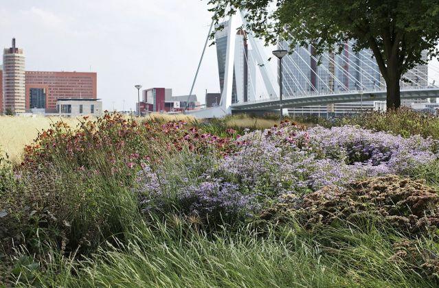 Piet Oudolf Gardens, Rotterdam. Photo Claudia Zanfi