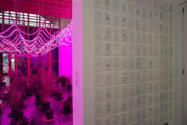 Zheng Bo. Il Partito delle Erbacce. Weed Party III. Exhibition view at PAV, Torino 2018