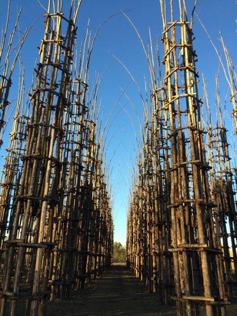 Cattedrale vegetale @ Ass. Giuliano Mauri