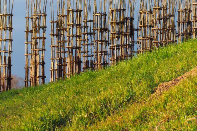 Cattedrale vegetale @ Ass. Giuliano Mauri. Foto di Alessandro Cappella