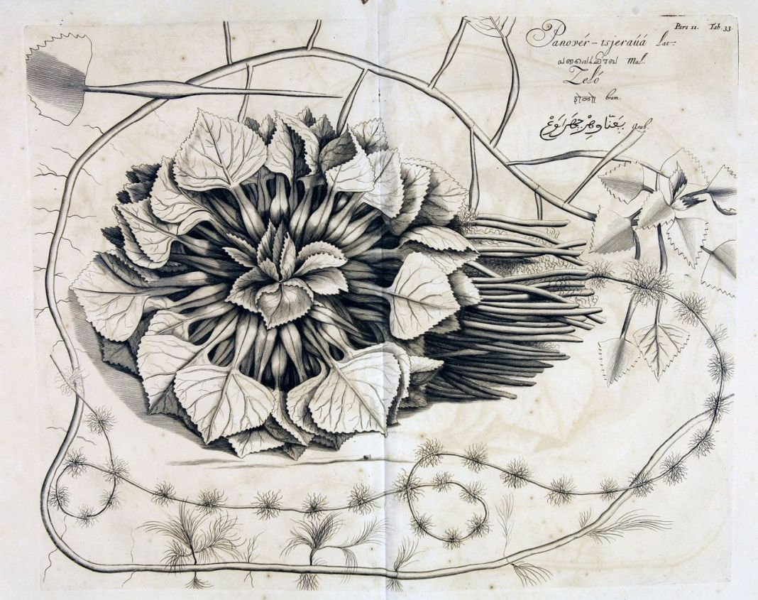 Hendrik Adriaan van Rede tot Drakenstein, Orto del Malabar, Amsterdam 1678-1703. Modena, Biblioteca Estense Universitaria
