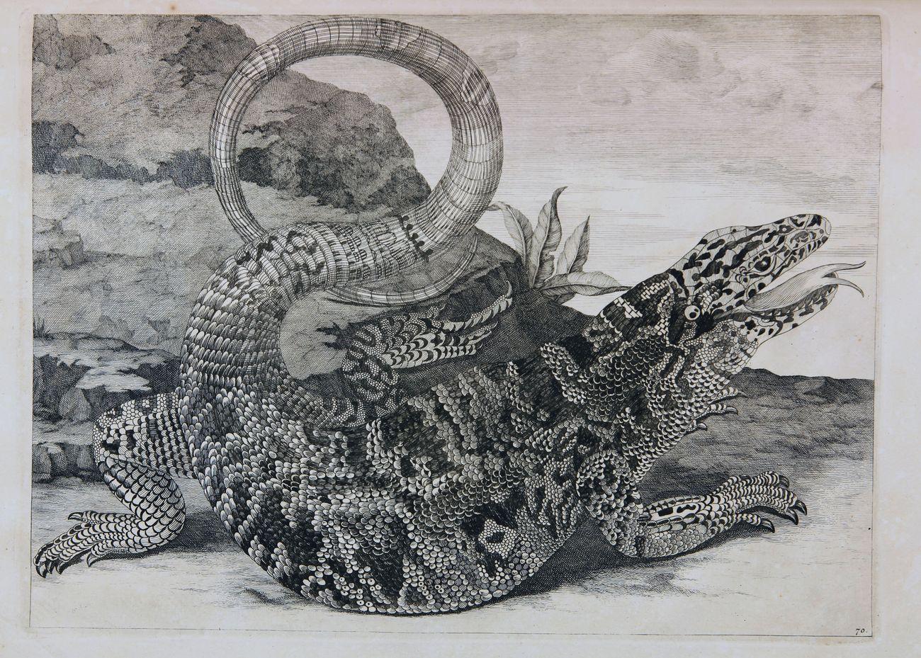 Maria Sibylla Merian, Gli insetti del Suriname, L'Aia, 1726. Modena, Biblioteca Estense Universitaria
