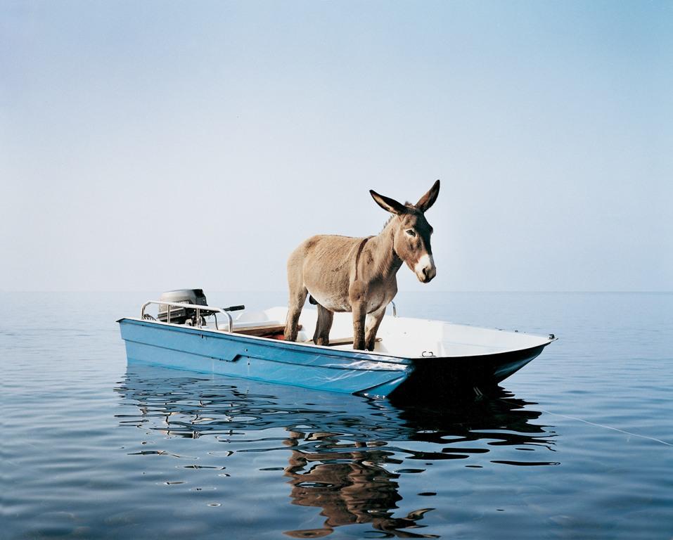 Paola Pivi, Untitled (donkey), 2003 Foto Hugo Glendinning, Courtesy Massimo De Carlo, Milan/London/Hong Kong