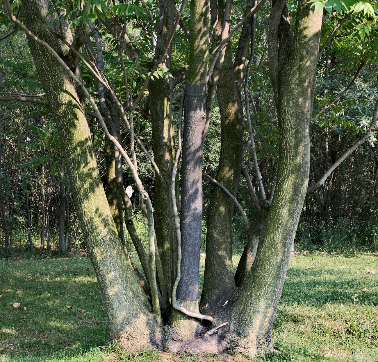 Giulio Saverio Rossi, Riscrivere un albero, 2017, gradite su albero, dimensioni ambientali. PAV Parco Arte Vivente, Torino
