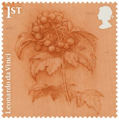 A sprig of guelder-rose, c.1506–12 Red chalk on orange-red prepared paper, Sunderland Museum and Winter Gardens. Courtesy Royal Mail