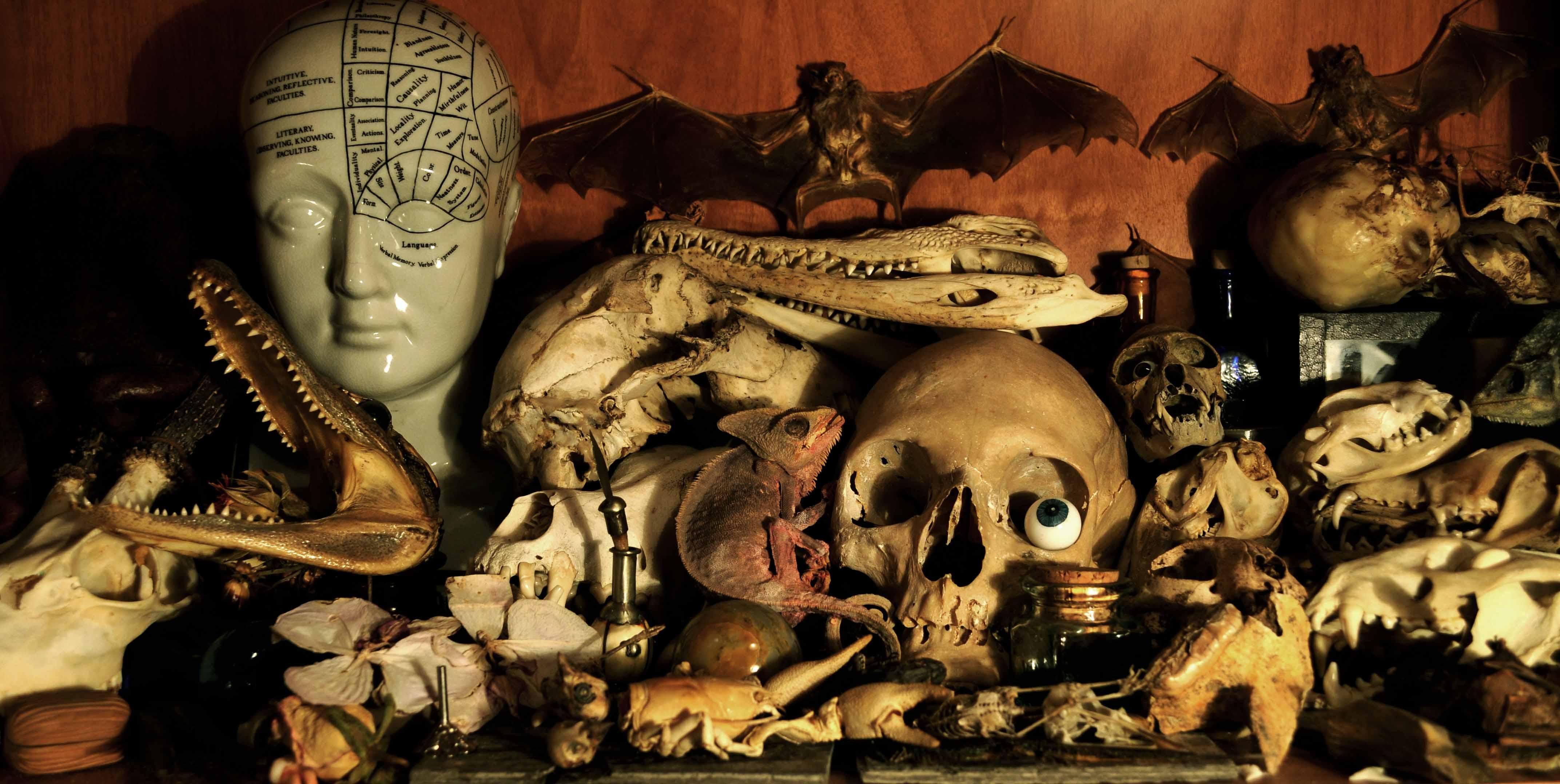 Wunderkammer – Le stanze della meraviglia: il documentario