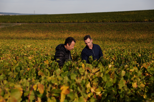 Ruinart, Vik Muniz, Reims, Vineyard, making of