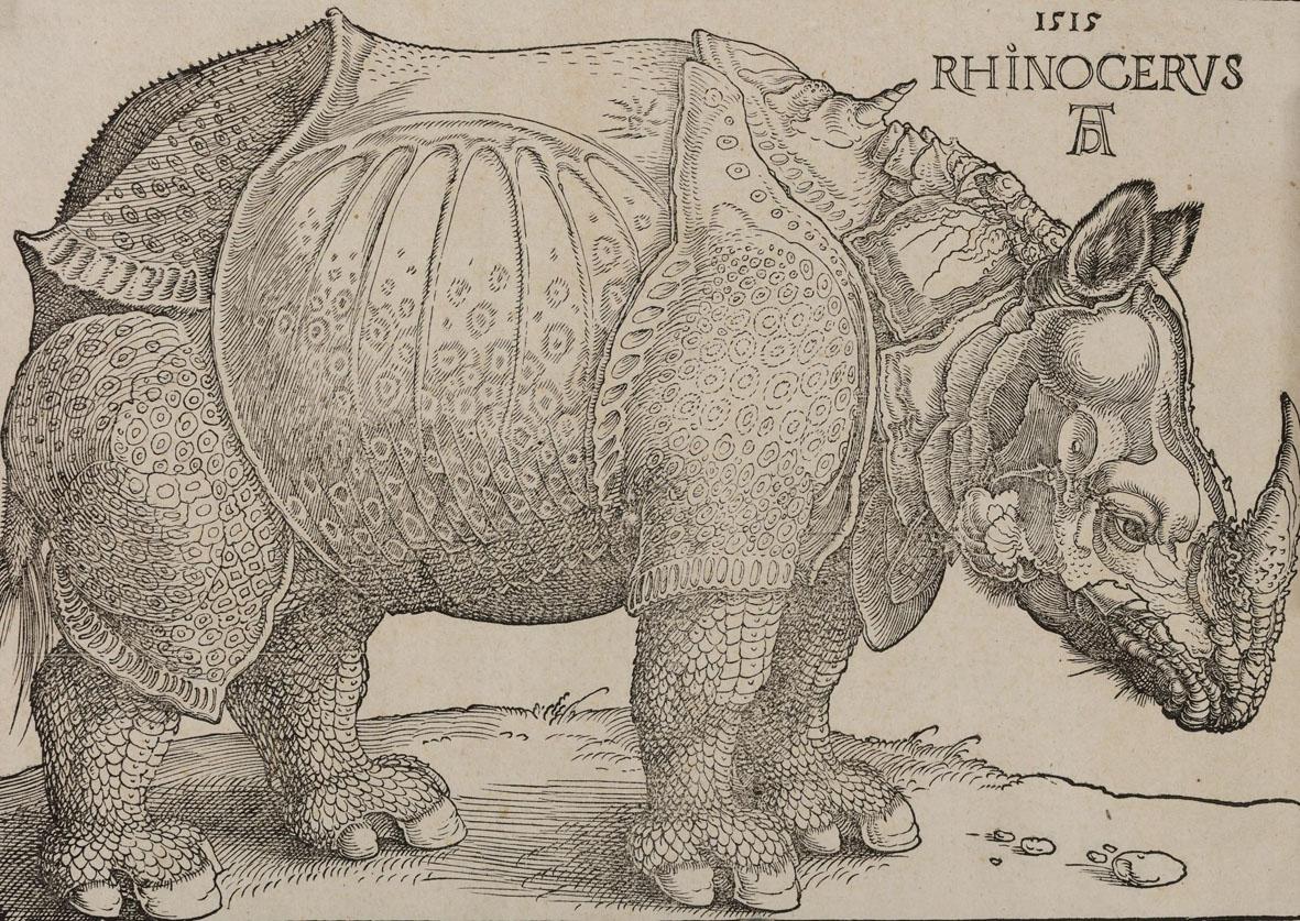 Albrecht Dürer, Rinoceronte, xilografia, Collezione Remondini