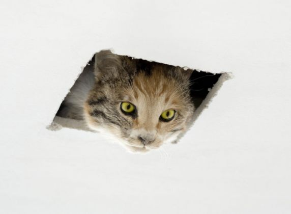 Eva and Franco Mattes, Ceiling Cat, 2016_ courtesy Postmasters Gallery, New York and Team Gallery Los Angeles