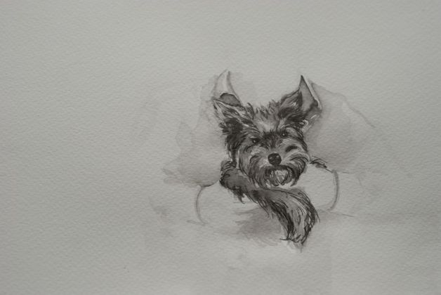 Ruth Beraha, Rocco, 2018 , Chinese Ink on paper, 29,7X21cm