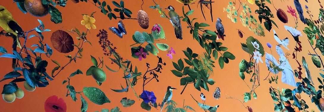 FALLEN FRUIT, Orto Botanico, Culture Concept Store, terza Sala Iridescenza