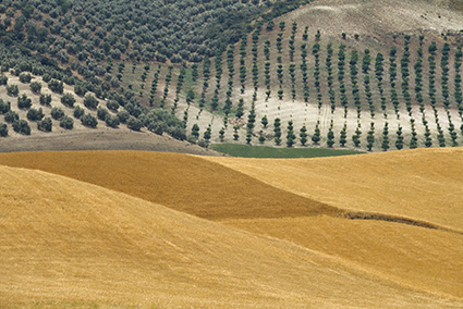 Franco Fontana, Spagna, 1985, Stampa Colour Fine Art Giclée, Hahnemuhle Baryta FB 350 gsm su Dibond. 136x200 cm Copyright Franco Fontana. Courtesy Franco Fontana Studio