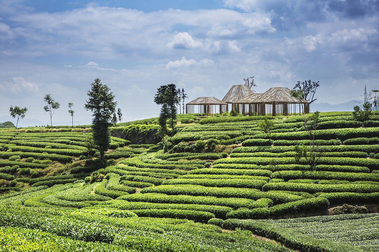 DnA, Bamboo Pavilion, Damushan Tea Plantation. Photo © Wang Ziling