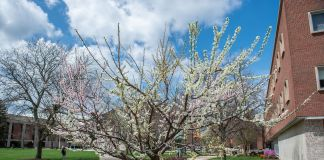 Sam Van Aken Tree of 40 Fruit In Bloom
